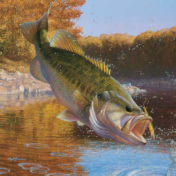 We are a local bass club in the lynchburg va area and for Local bass fishing clubs